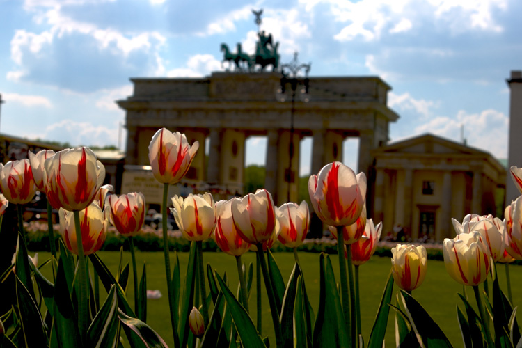 flowers infront of the Brandenburger Tor